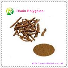 Hochwertige natürliche Pflanzenextrakt Radix Polygalae