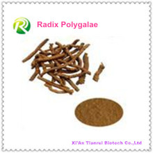 Extracto de planta natural de alta calidad Radix Polygalae