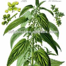 100%natural top quality Nettle P.E. or Extracts