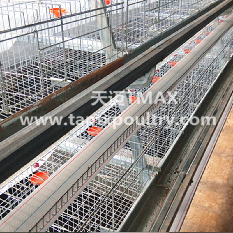 A Type Poultry Cages
