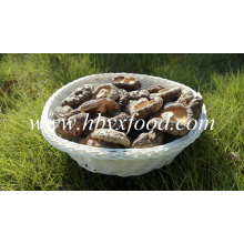 Smooth Face Shiitake Champignons entiers