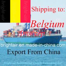 Transporte de carga Ocean Shipping Freight Forwarder de China a Bélgica