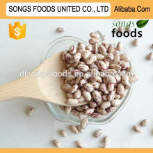 Export large white kidney beans