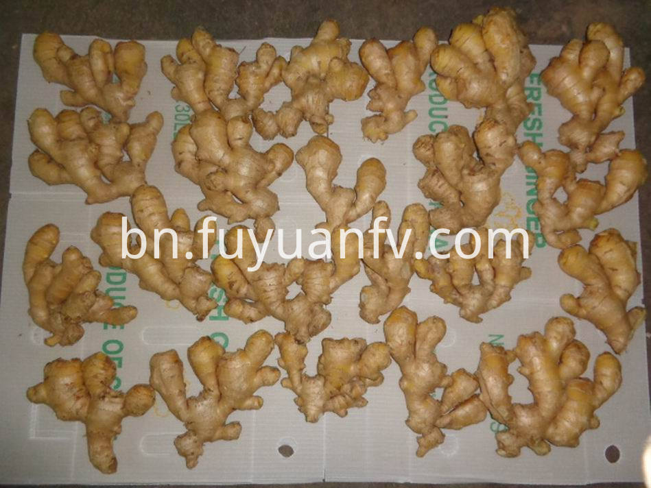 Air Dried Ginger35