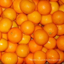 chinese high quality mandarin orange