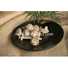 Saboroso cogumelo secado vegetal da flor do chá