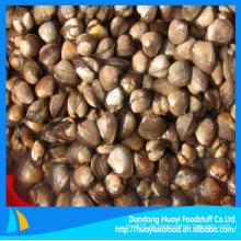 Gefrorene Blutmuschel frische Meeresfrüchte zum Verkauf