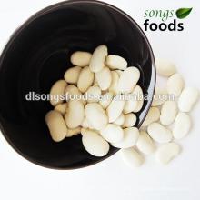 Trockene Fava Bohnen, Puls