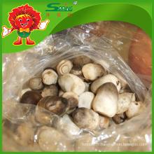 Glacière à froid Mushroom Straw Straw Champignon