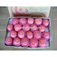 High Quality China Hot sale Fresh Fuji Apple