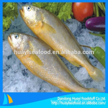 high quality wild seawater fish frozen yellow croaker