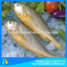 Alta qualidade peixe de água salgada congelado amarelo croaker
