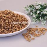 Barley Tea (Damaicha)