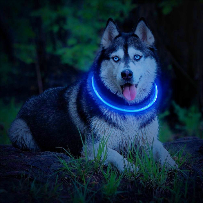 Led Light Up Collar