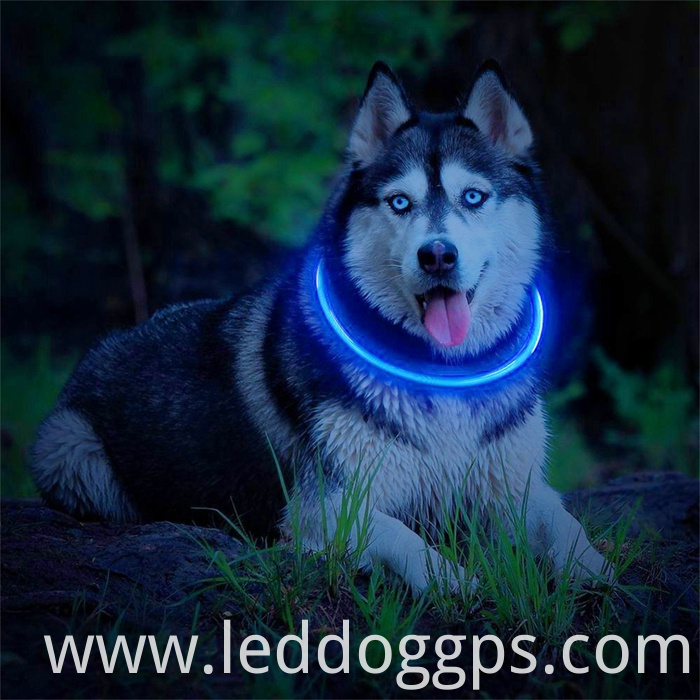 Light Up Tube Dog Collar