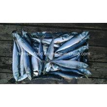 New Fresh Fish Seafrozen Mackerel