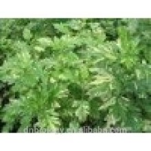 Natural Aiye Leaf Extract Powder 4:1 10:1