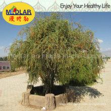 Medlar Lbp Nature Ningxia Organic Wolfberry