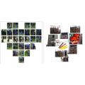 2-Takt-Benzin Kettensäge Holzschneidemaschine Preis professioneller Hersteller in China