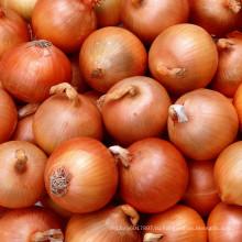 HON03 Zuanda желтый стоимость семян лука в семена овощных культур для продажи