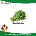 Suntoday Asian vegetable F1 Organic garden cohete argula lechuga Lactuca sativa seeds (32004)