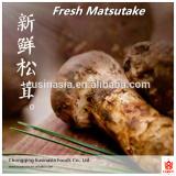 mushroom for sale tricholoma matsutake /fresh matsutake mushroom price