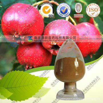 Extracto de espino natural Hawthorn Flavones 80%