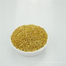 Albaricoque / comida de pájaro blanca amarilla de alta calidad de la escoba