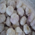 2016 New Arrival Fresh Normal White Garlic Hot Sale