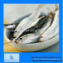 Bon marché, les entreprises et les fournisseurs de sardines à bas prix