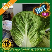 2017 Best Price Fresh Chinese Cabbage