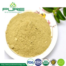 Top Quality Organic White Tea Extract Powder