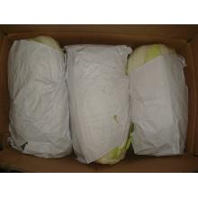 Nueva col fresca de cultivo para exportar (1.5kg)
