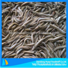 ample supply fresh cheap frozen fish sand lance bottom price