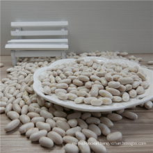 High Quality White Kidney Bean Market Price