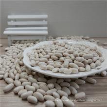 High Quality White Kidney Bean Market Price