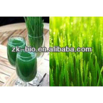 Pó de suco de grama de cevada orgânica 100% natural