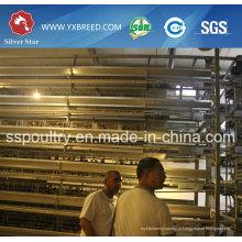 Оборудование фермы для слоя или откорме бройлеров