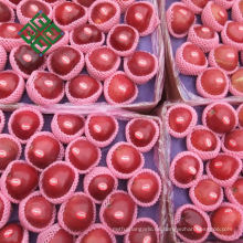 Manzana fresca china gala apple para nueva temporada