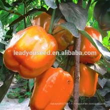 MSP05 Rouse orange couleur F1 graines de poivron hybride prix