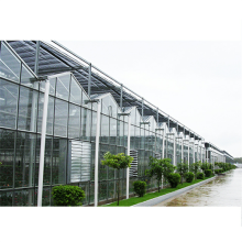 Leading for Nursery Glass Greenhouse Agricultural Large Venlo Glass Flower Greenhouse export to St. Pierre and Miquelon Wholesale