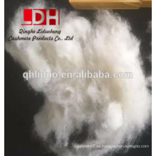 kyrgyz dehaired fibra de cachemira blanca respetuosa del medio ambiente