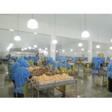 Factory producing AD yellow sweet potato