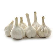 Ail blanc de qualité 5,0-5,5 cm