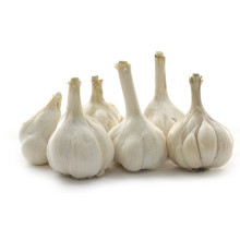 5.0-5.5cm quality white garlic