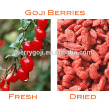 China Pure Natural Medlar/bagas-goji Food