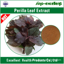 Good Quality for Ratio Herbal Extract natural Perilla Leaf Extract export to Netherlands Manufacturers