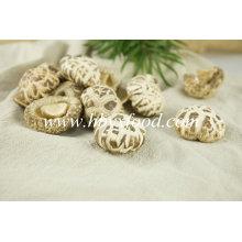 Cogumelo De Flores Secas, Vegetais Desidratados