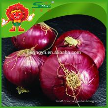 Proveedor de cebolla roja fresca, cebolla grande en bolsa de malla