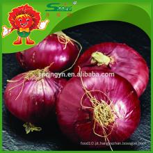 Fornecedor de cebola vermelha fresca, grande cebola no saco de malha